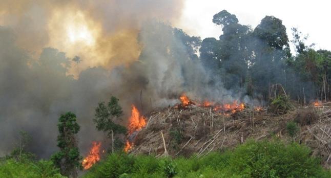 pembakaran hutan dan lahan